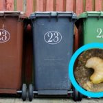 Why You Have Maggots in your Bin and What to do About it