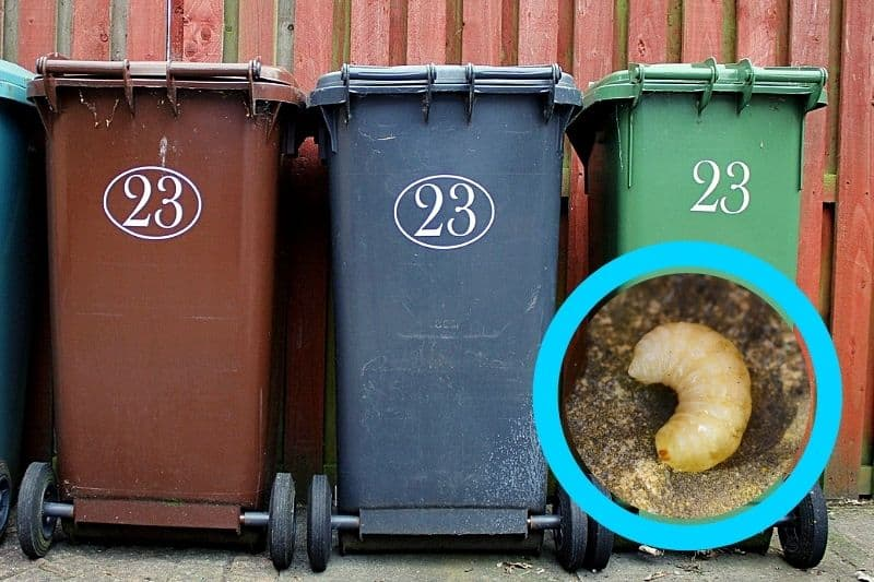 Why You Have Maggots in your Bin
