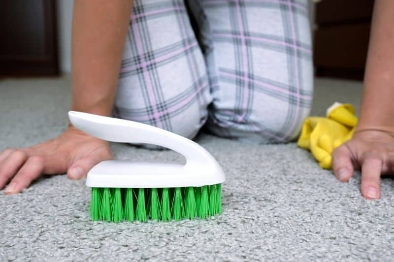 Use a Brush to Gently Scrub the Carpet