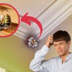 Why Do I Have Lethargic Wasps in the House?